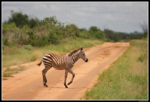 Kenya-0500-2
