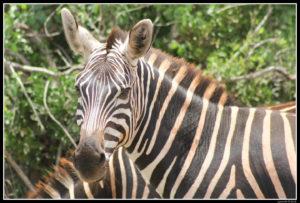 Kenya-0510-2