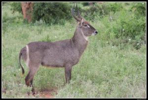 Kenya-0578