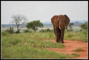 Kenya-0663