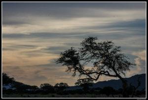 Kenya-0802