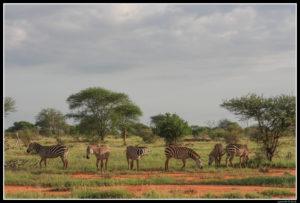 Kenya-0960