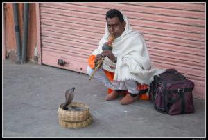 India (80)